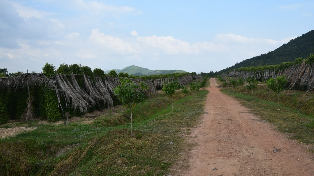 Die Pfefferplantagen von La Plantation in Kampot