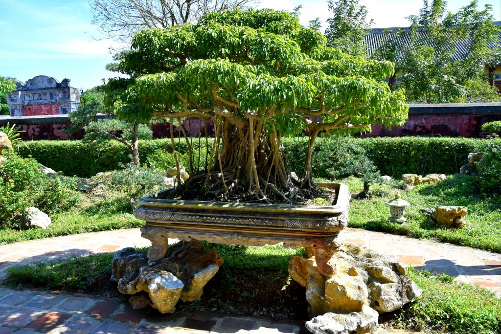 Banyan-Bonsai in der Gartenanlage
